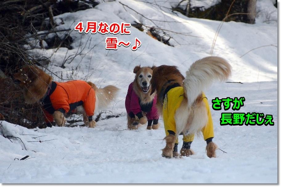 DSC_2646 4月なのに雪~