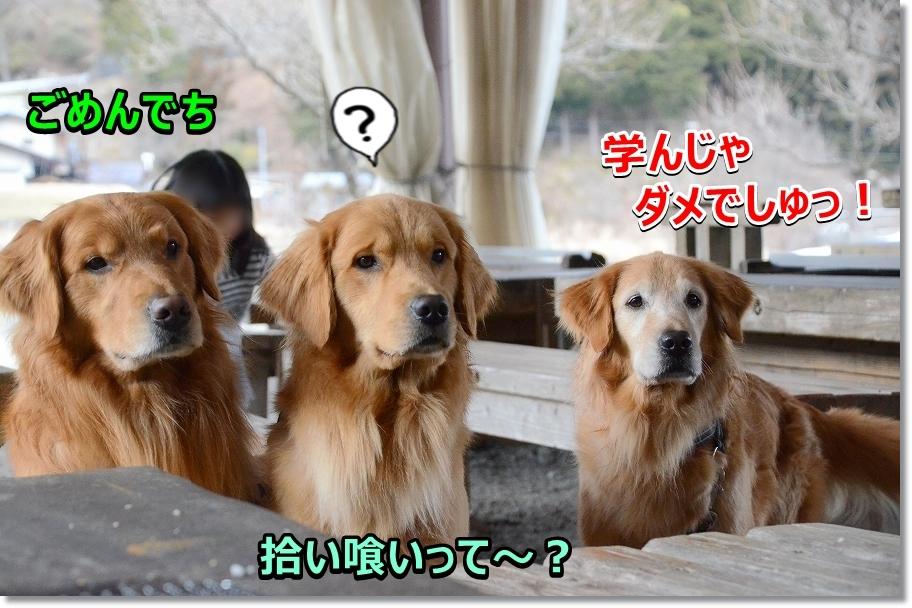 DSC_2843拾い食いしteitanoka? 反省