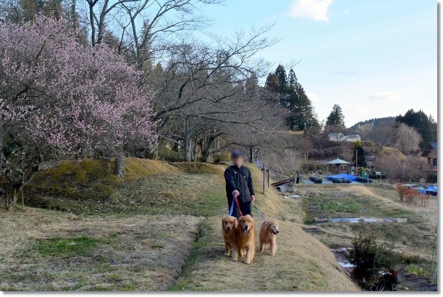 DSC_7060桜も
