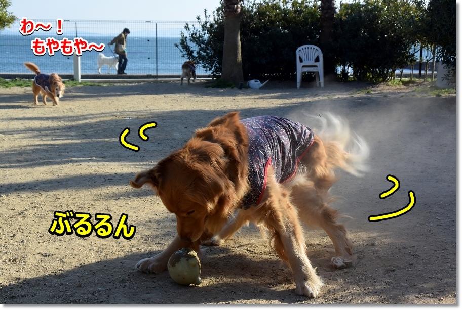 DSC_6212 ぶるるん 砂埃