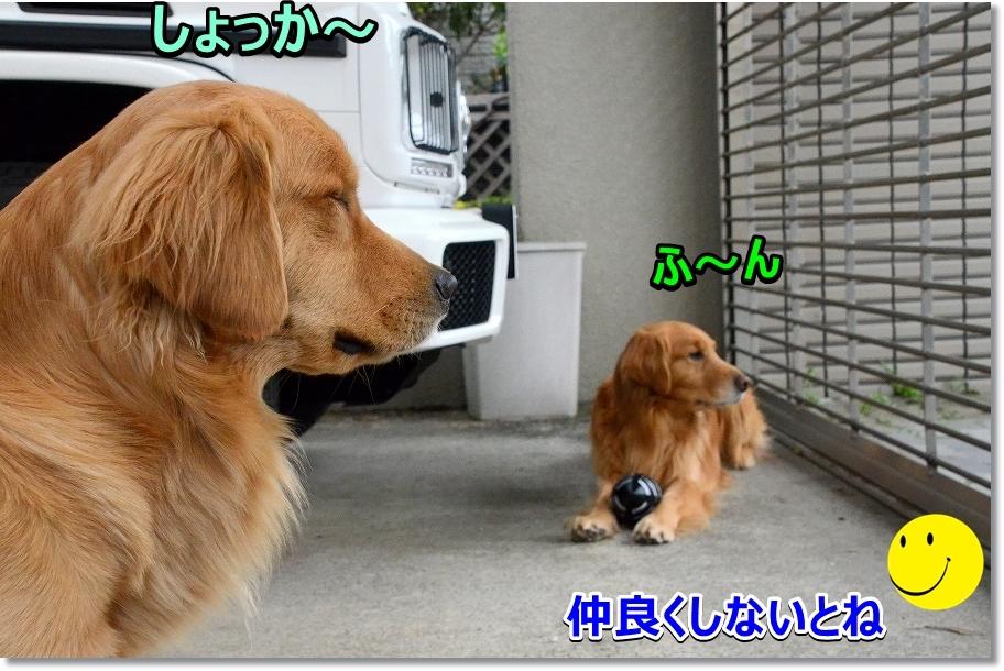 DSC_3258ふ~