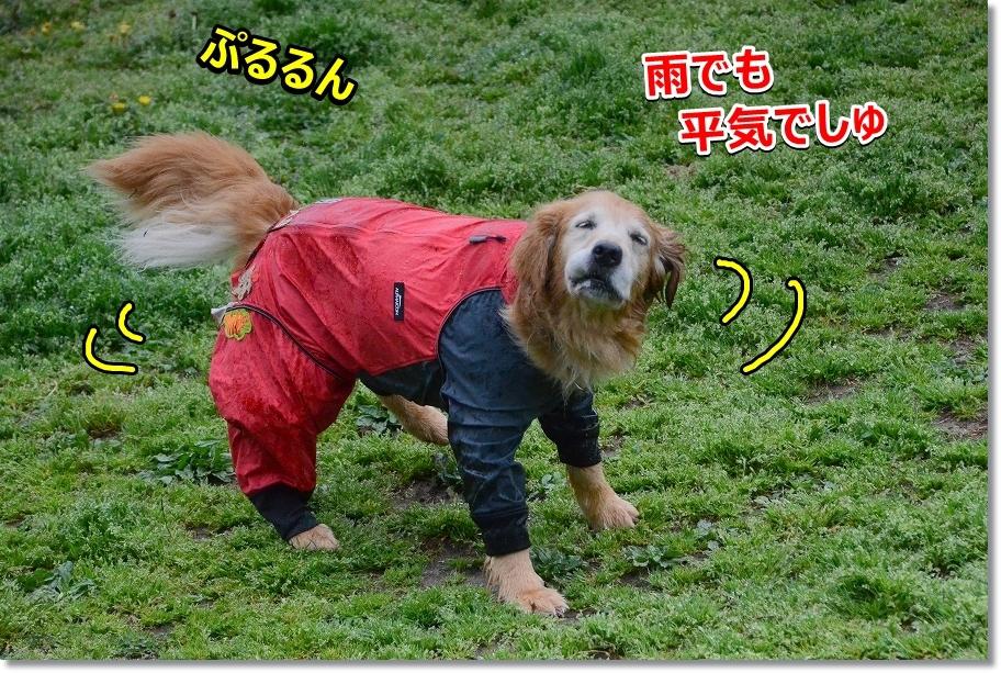 DSC_2850雨でしゅね