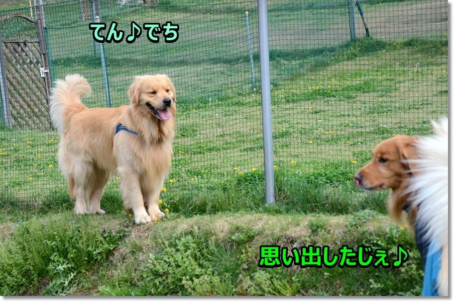 DSC_3130 テンちゃん
