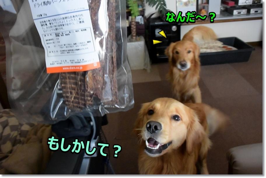 DSC_6382キラキラ