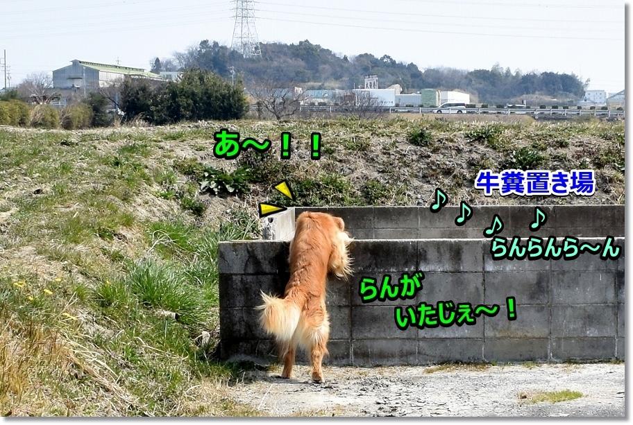 DSC_6543 - コピー
