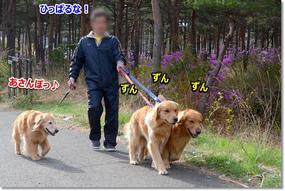 DSC_4345あさんぽっぽ