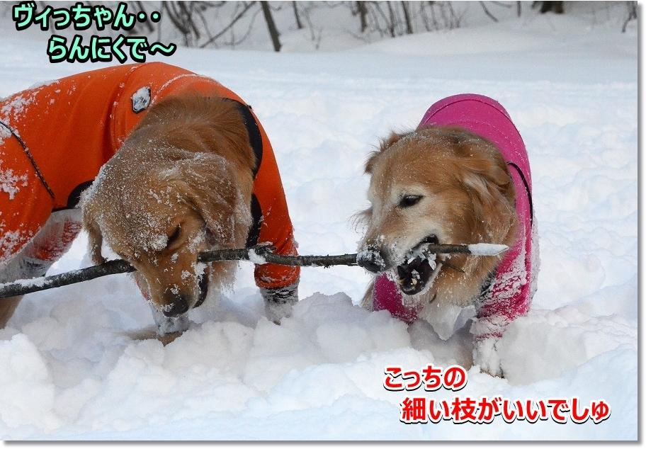 DSC_0897_20170301202159489.jpg