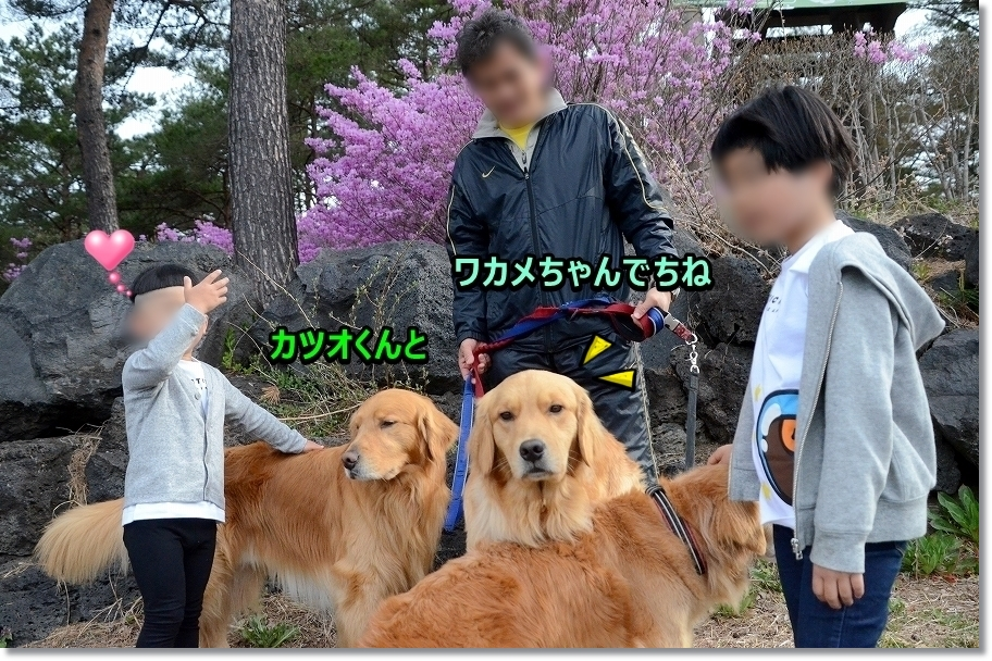 DSC_4333_20170507233828120.jpg