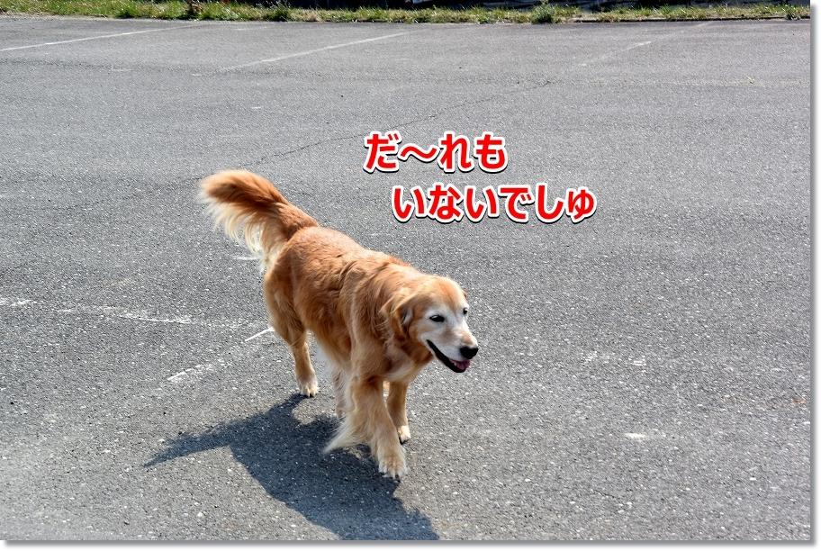 DSC_6537_20170502230157aa7.jpg