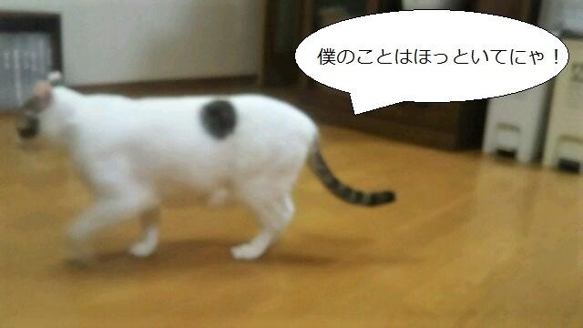 DSC_0667.jpg