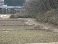 2017-03-02しろぷーうさぎ03