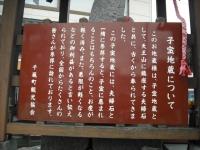 2017-04-21しろぷーうさぎ09
