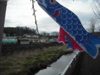 2017-04-21しろぷーうさぎ鯉16