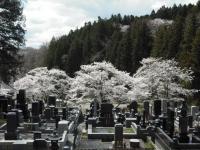 2017-04-23しろぷーうさぎ04