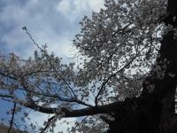 2017-04-19重箱石053