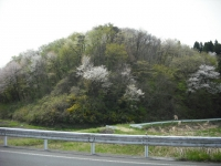 2017-05-04しろぷーうさぎ03