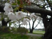 2017-05-05展勝地028