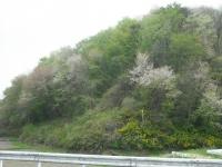 2017-05-06しろぷーうさぎ03