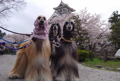 長浜桜4-9-2