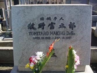 Makinotomitarobohi.jpg