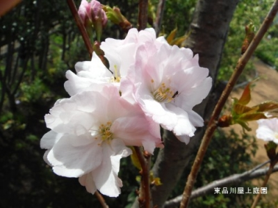 amanogawa3.jpg