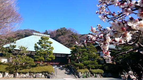 jyoumyoujiDSC_1875.jpg