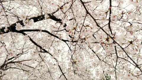 4.8 petale