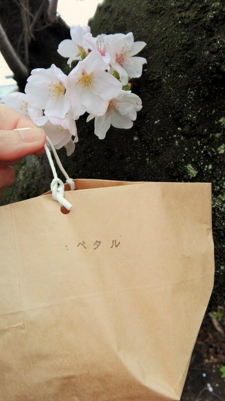 4.8 petale13