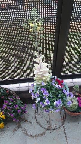 葉牡丹花 (2)
