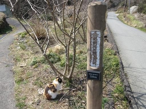 和銅遺跡往路にて猫