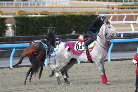 【競馬】ラニ、空馬と喧嘩する