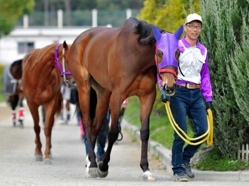 【競馬予想】 第60回サンケイスポーツ杯阪神牝馬ステークス(GⅡ)