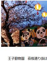 王子動物園夜桜