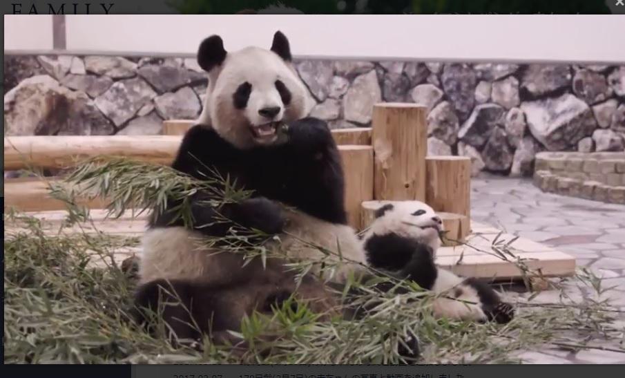 panda_6mth.jpg