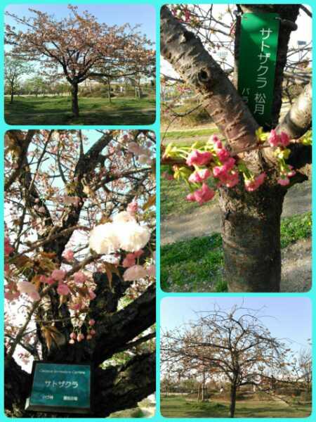 17-04-13-19-41-59-515_deco_20170413195053.jpg