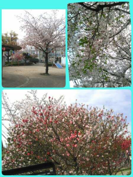 17-04-13-20-05-22-193_deco_20170413200601.jpg