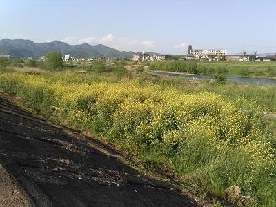 京都自転車道33 (60)