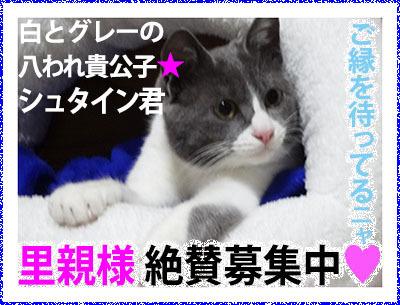 Banner_boshuShuta400.jpg
