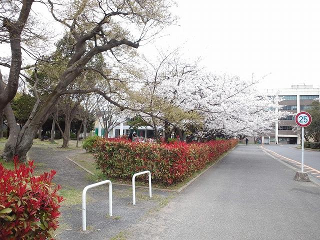 Miyajidake 019