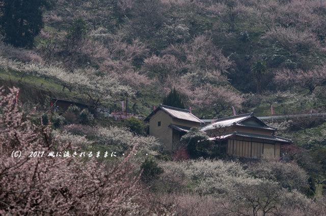 奈良の絶景! 賀名生梅林(あのうばいりん)の風景10