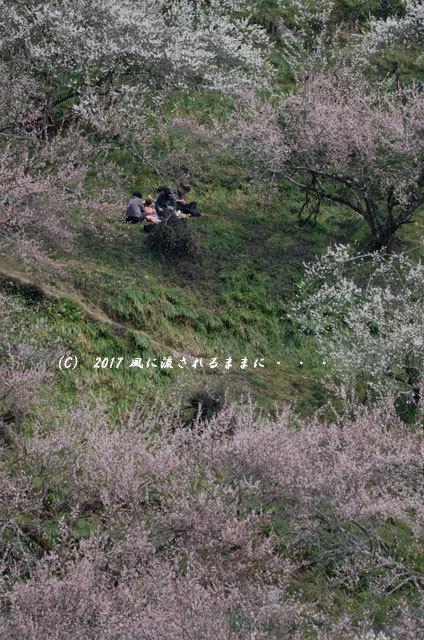 奈良の絶景! 賀名生梅林(あのうばいりん)の風景7