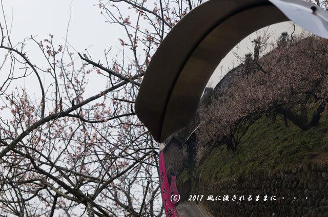 奈良の絶景! 賀名生梅林(あのうばいりん)の風景20