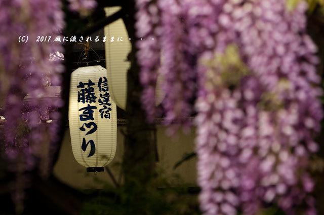 熊野街道 信達宿(しんだちじゅく)の梶本家の野田藤10
