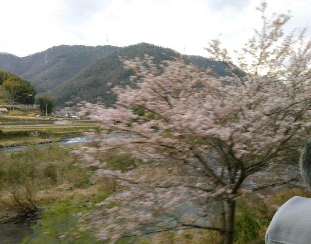 29406kawasaku3.jpg