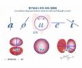 電子軌道と母音相関図