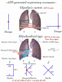 ATP生成呼吸共鳴(肺共鳴)