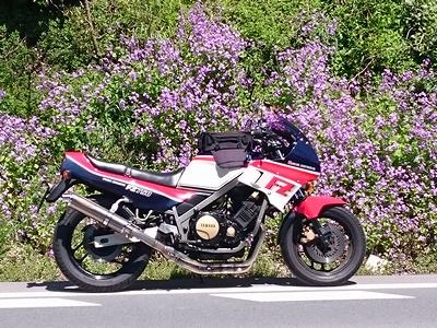 iruehkig6565 (1)