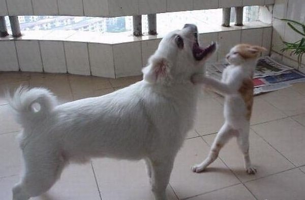 Kung_Fu_Fighting.jpg