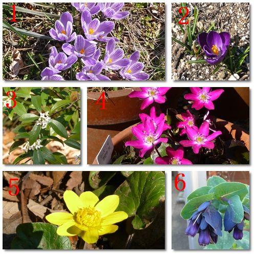 東京都薬用植物園の花