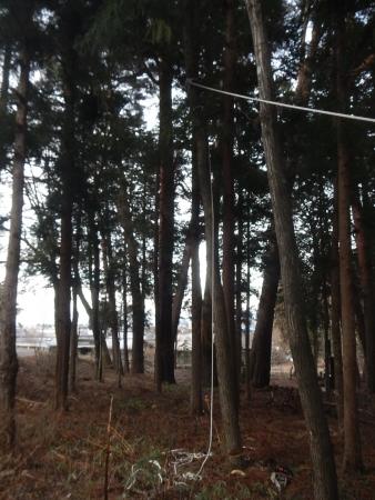 くるみの木 (2)